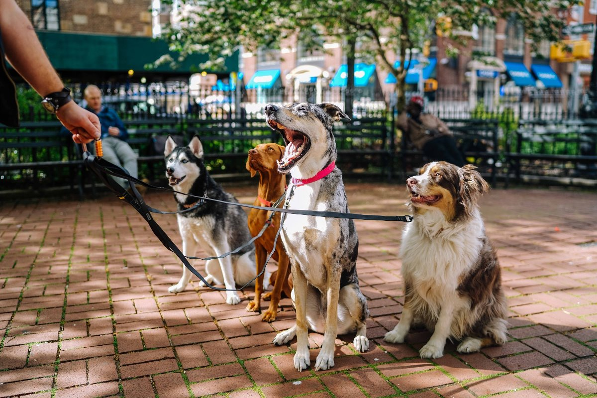 4 dogs sitting down on a walk